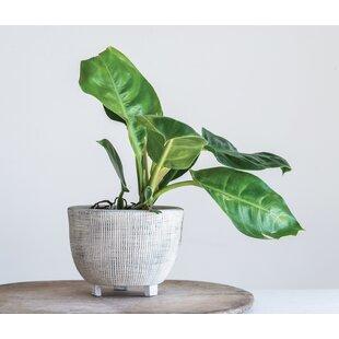 Ke Large Distressed Footed Terracotta Pot Planter