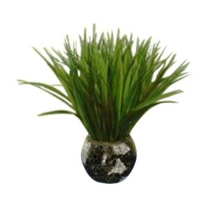 Grass in Mosaic Container (Set of 2)