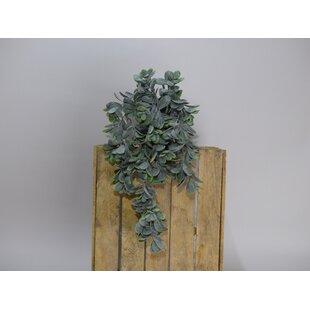 55cm Artificial Crassula Plant In Pot By The Seasonal Aisle