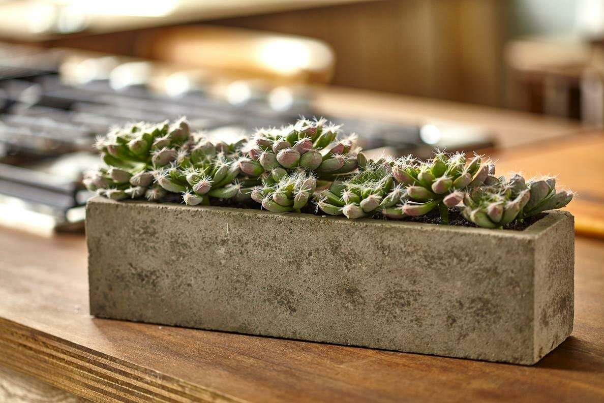 nearly natural succulent garden desk top plant in planter