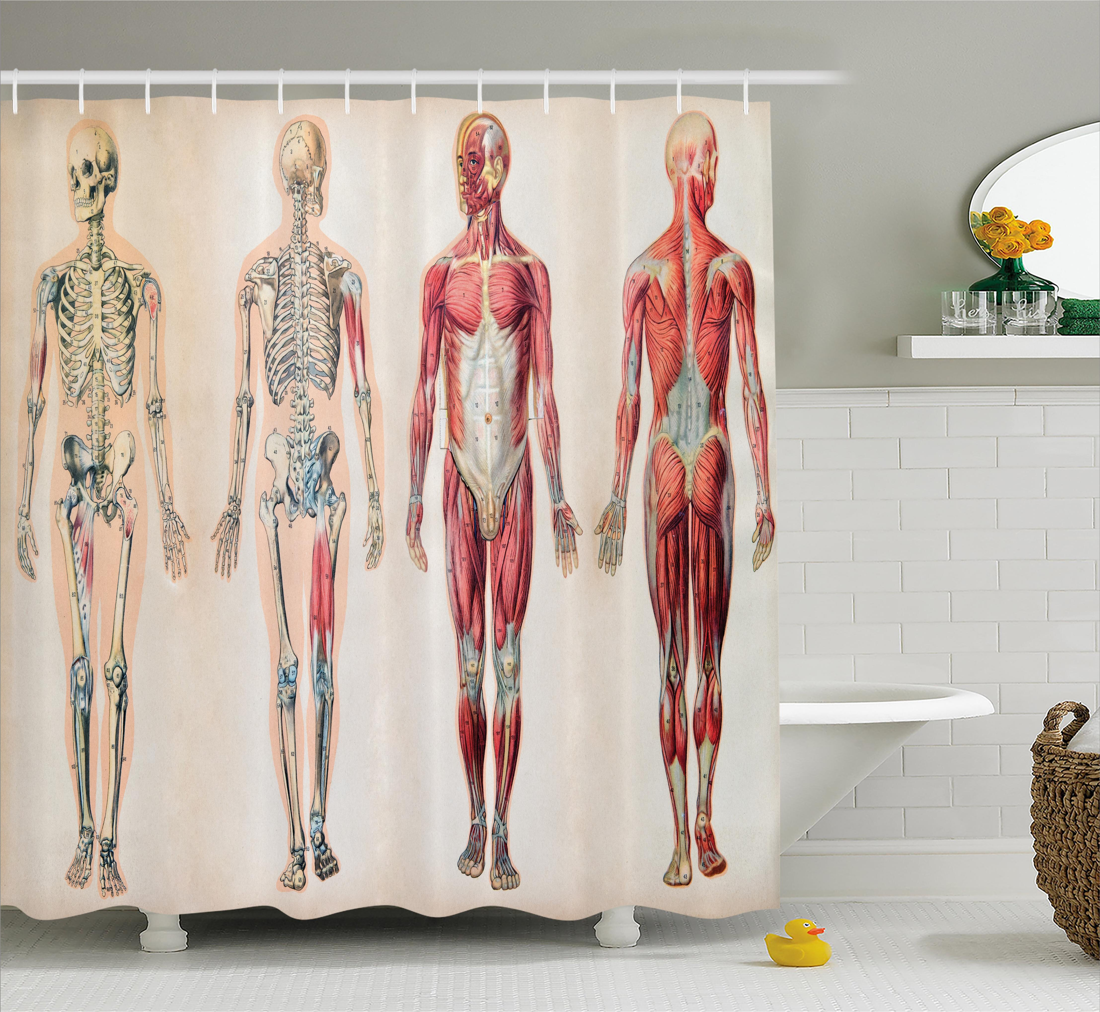 Ambesonne Human Anatomy Vintage Chart Of Body Front Back Skeleton
