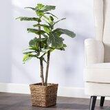 Foliage Tree in Basket