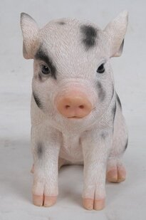 Baby Pig Front View