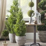 Evgenia Artificial Cedar Topiary in Pot