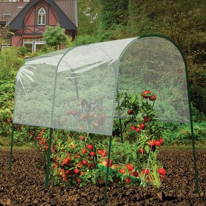 Tomato 4 Ft. W X 6.5 Ft. D Mini Greenhouse