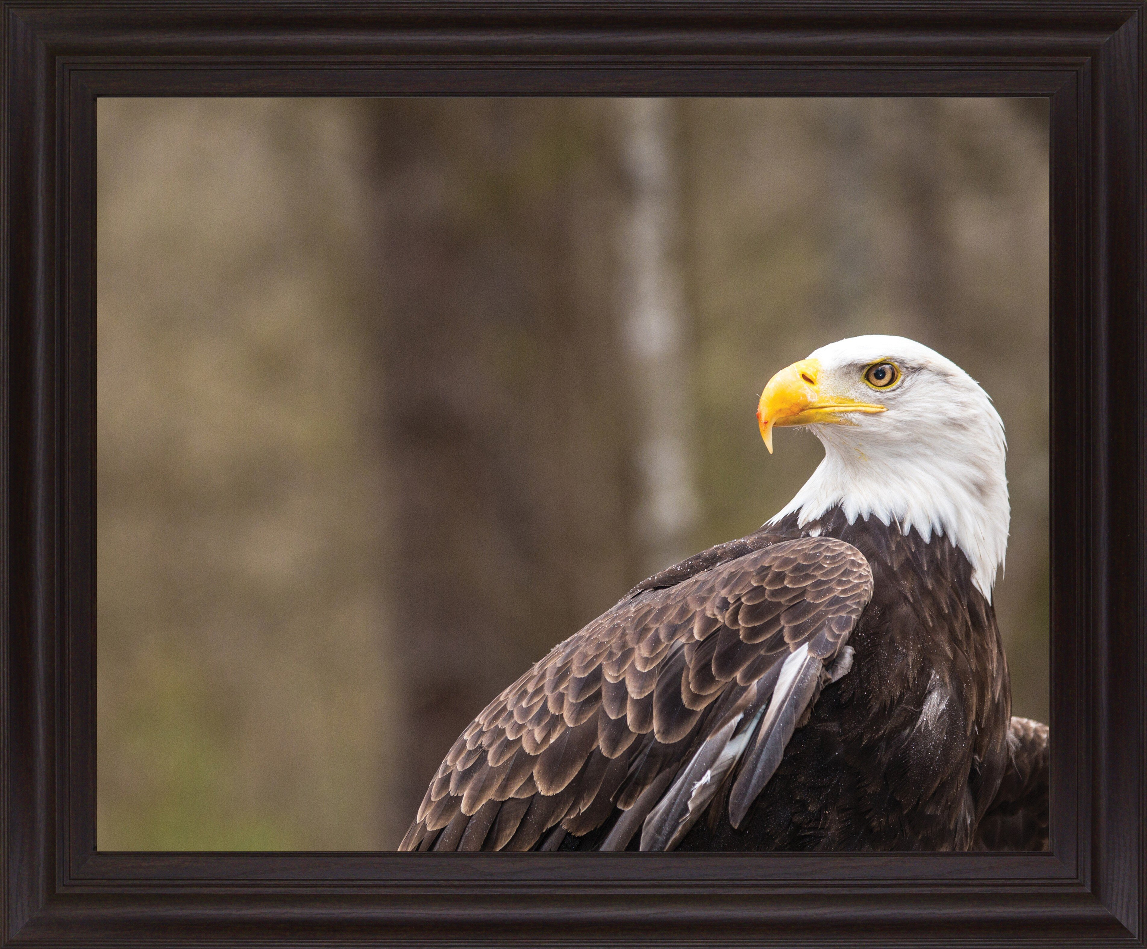 Millwood Pines Majestic Eagle By Garytog Picture Frame Photograph Print On Plastic Wayfair