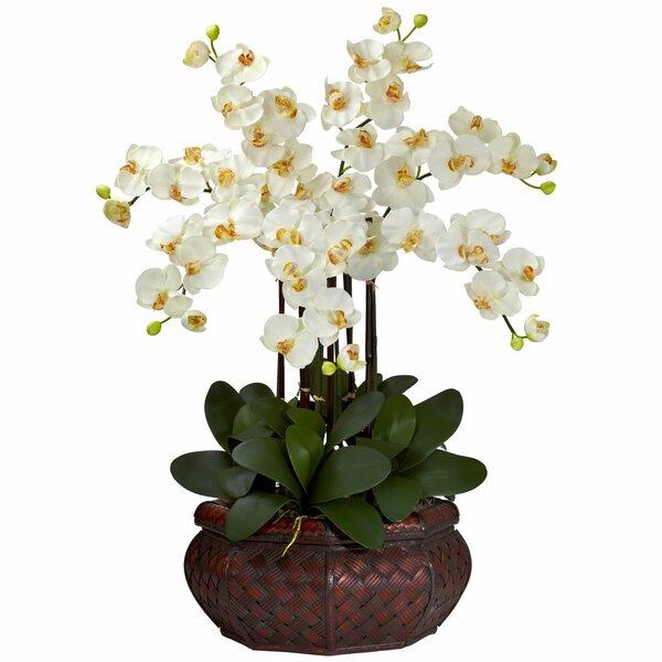 Charlton home large phalaenopsis silk flower arrangement reviews charlton home large phalaenopsis silk flower arrangement reviews wayfair mightylinksfo