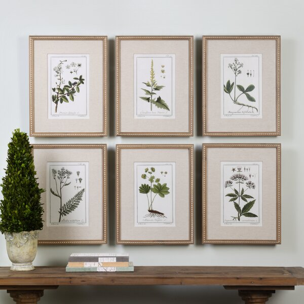 Three Posts Floral Botanical Study By Grace Feyock 6 Piece Picture Frame Graphic Art Print Set On Paper Reviews Wayfair