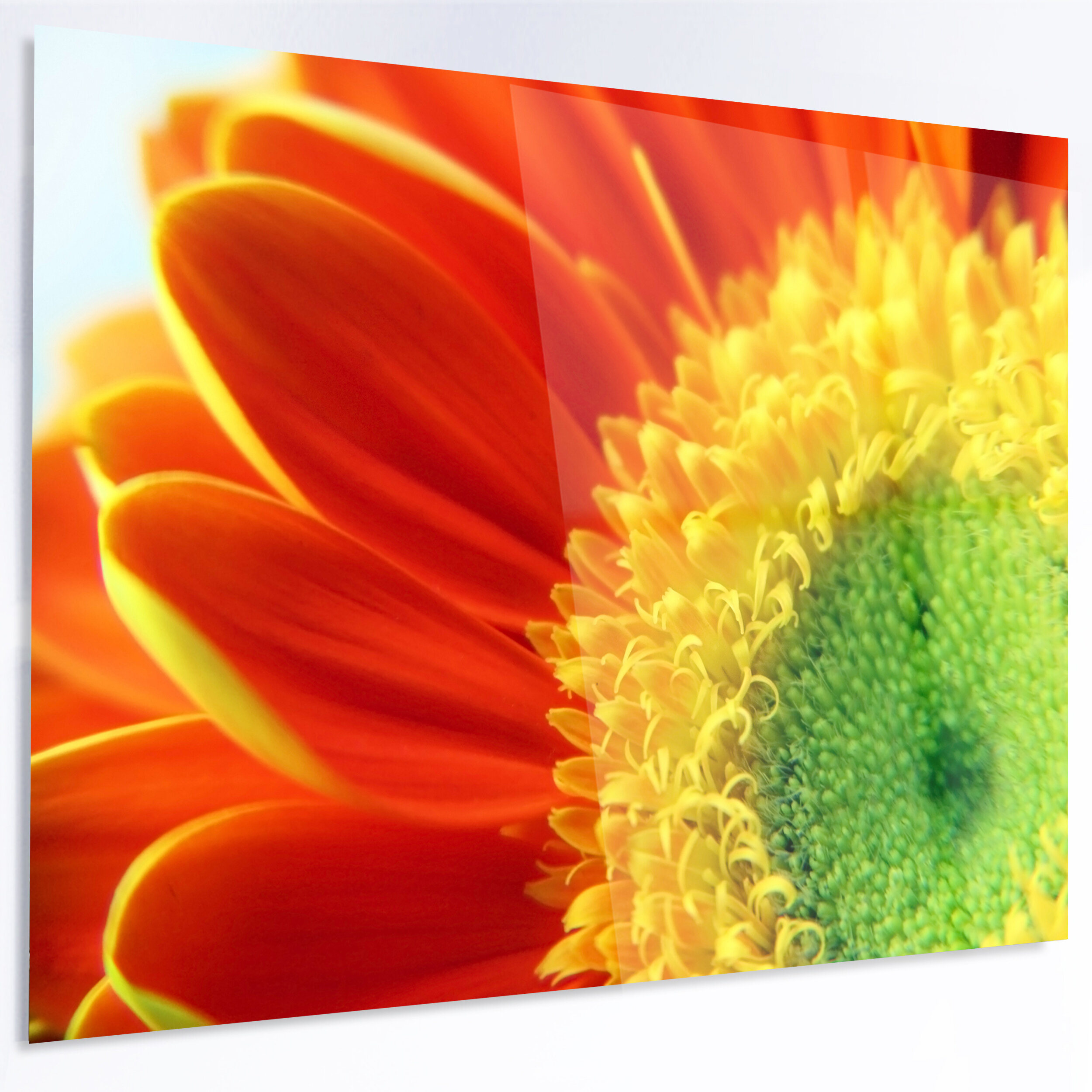 Designart Gerber Daisy Flower Petals Photographic Print On Metal