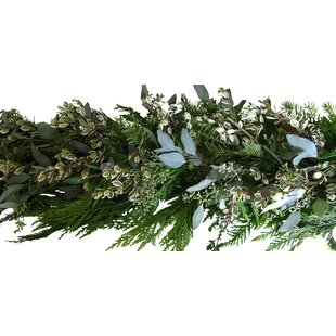 Comparison Holiday Garland with Rhamnus By From the Garden