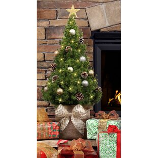 a51fb34ca8b 3  Green Spruce Live Christmas Tree with Lights