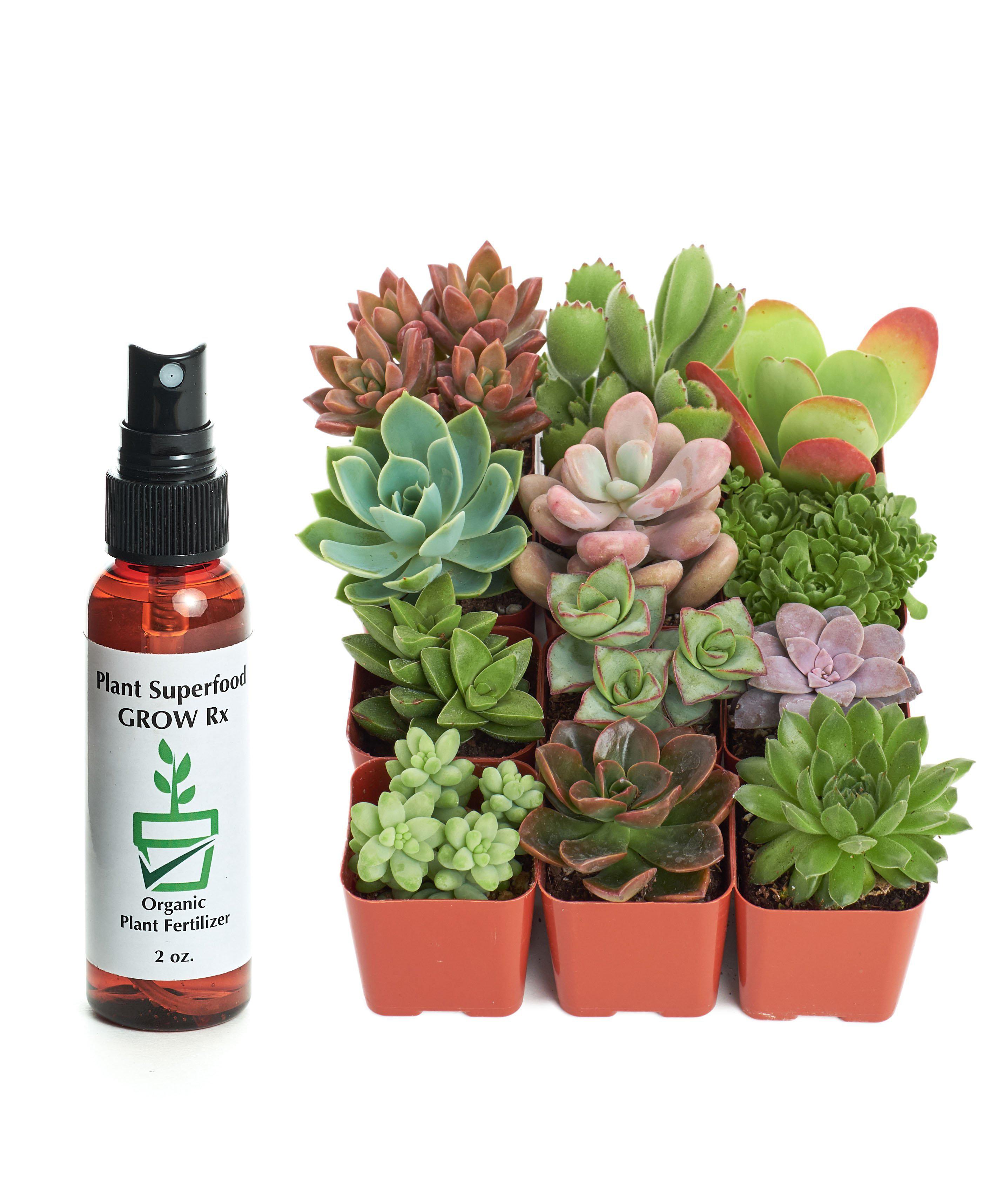 Wrought Studio 12 Live Succulent In Planter Set Wayfair