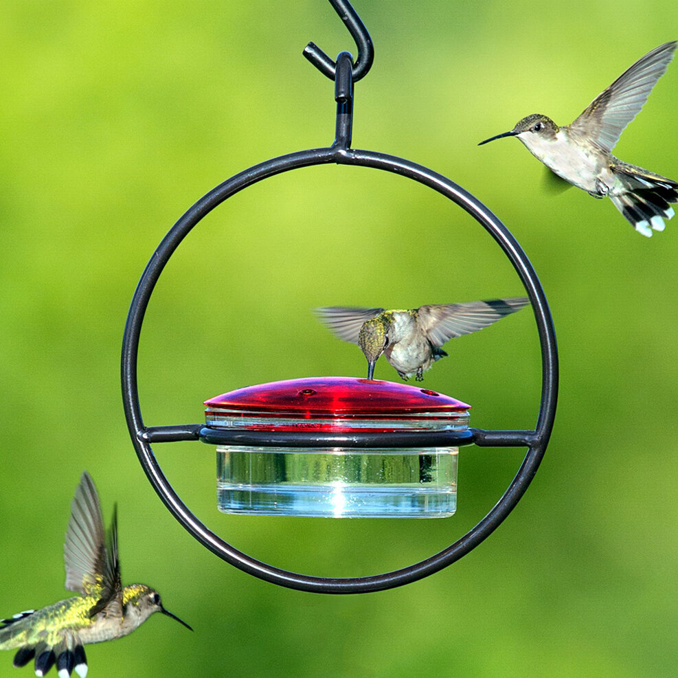 environment web products feeder model yellow flower red real hummingbird single pack humingbird so