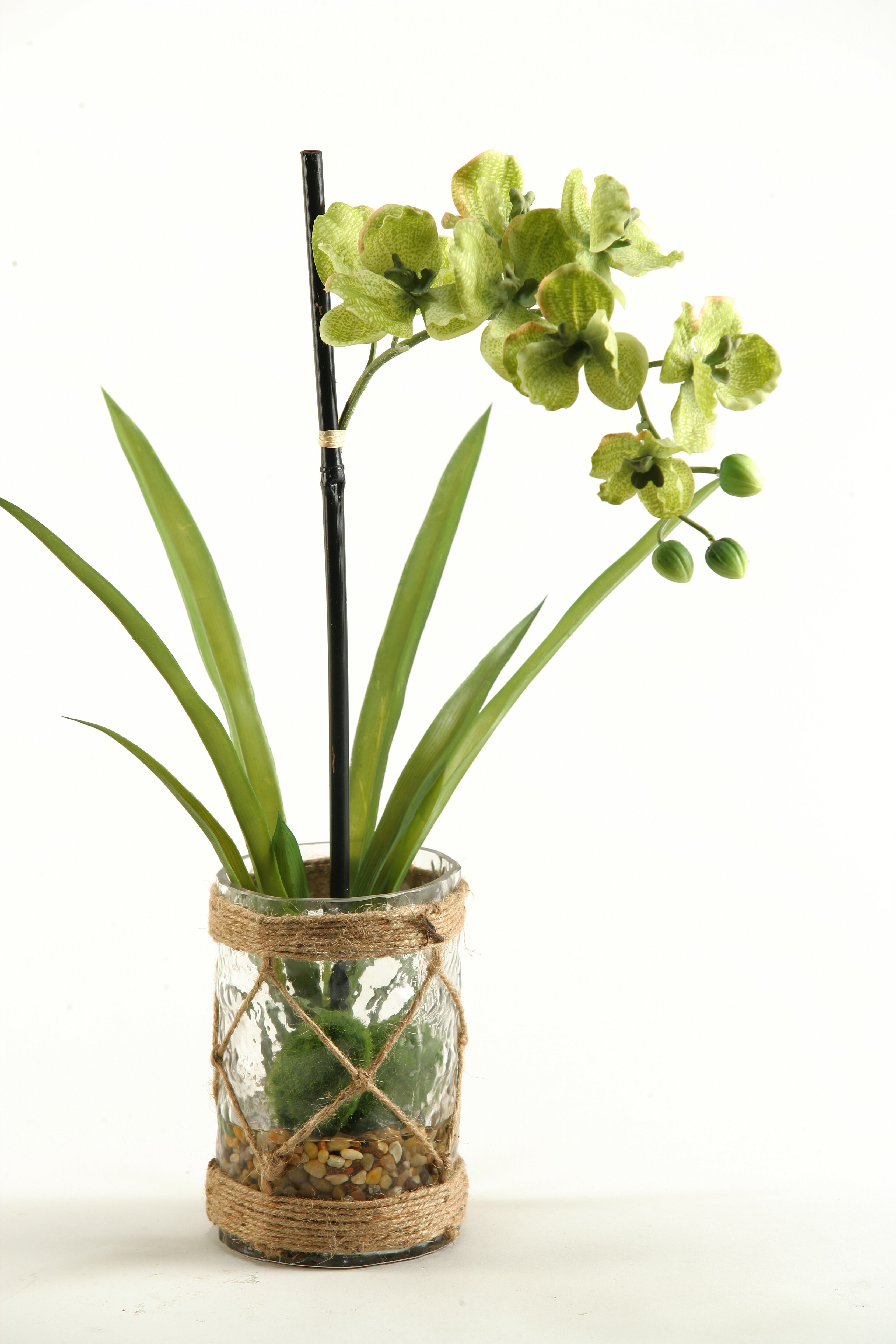 Vanda orchids with foliage and seagrass netting in glass vase vanda orchids with foliage and seagrass netting in glass vase reviews birch lane reviewsmspy