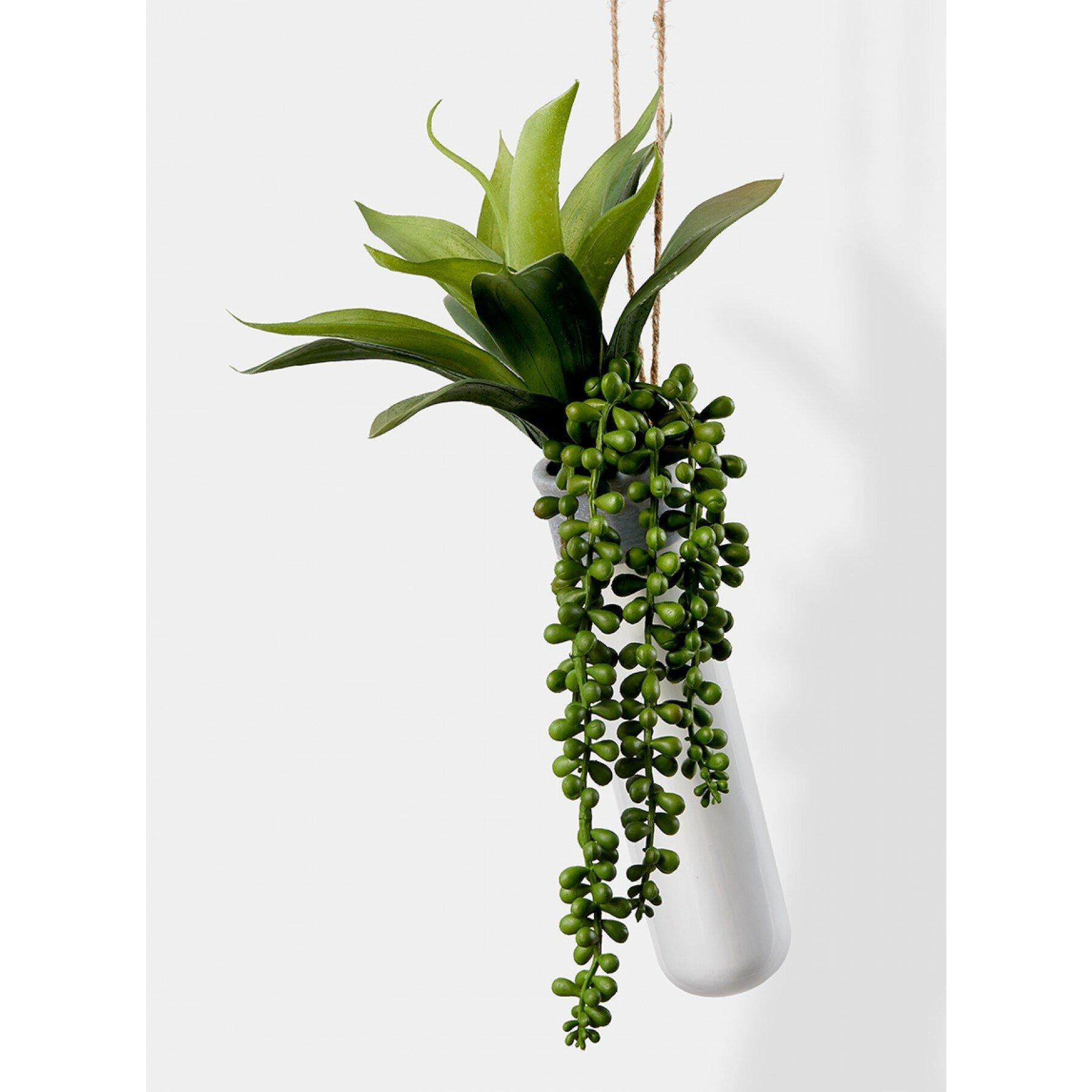 Bungalow Rose Hanging Succulent Plant In Ceramic Planter Reviews Wayfair