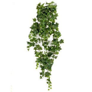 Hanging Bush Ivy Plant By Sol 72 Outdoor
