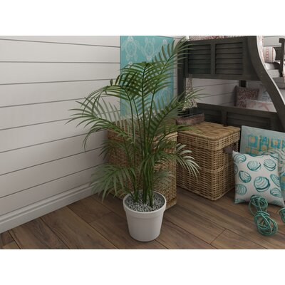 Kentia Palm Tree in Pot Beachcrest Home Size: 60 H
