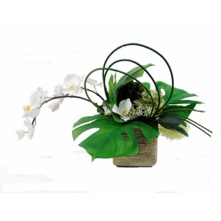 Top White Orchid Arrangements | Wayfair CS15