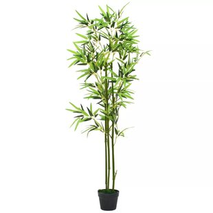 Floor Plant Bamboo In Pot By The Seasonal Aisle