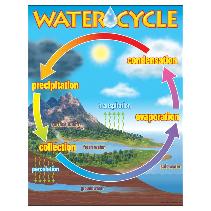 Trend enterprises the water cycle chart reviews wayfair the water cycle chart ccuart Image collections