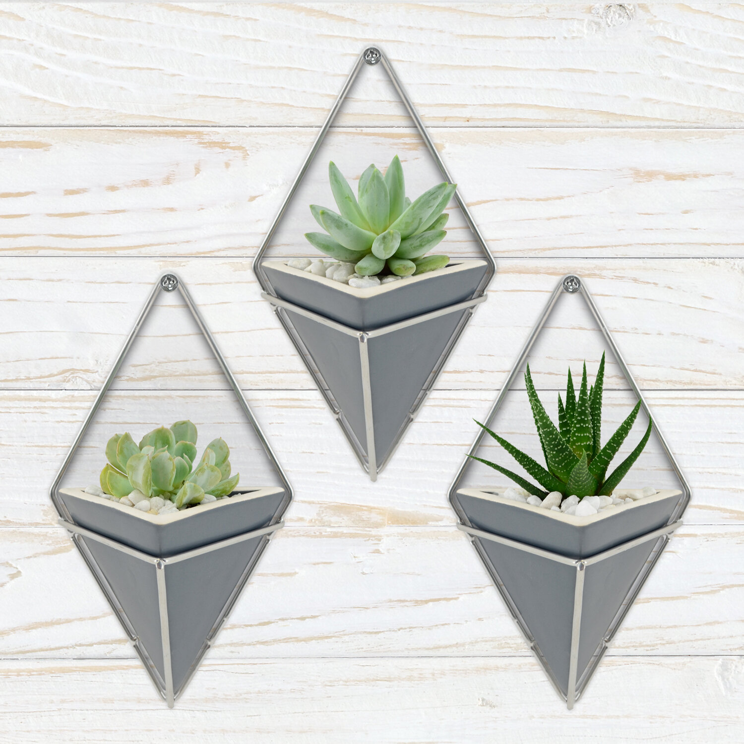 wall hung succulent planters for sale