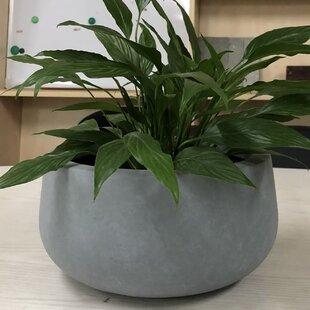 Williston Forge Gagne Low Bowl Pot Planter