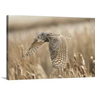 Great Horned Owl By Peter Stahl Photographic Print On Canvas