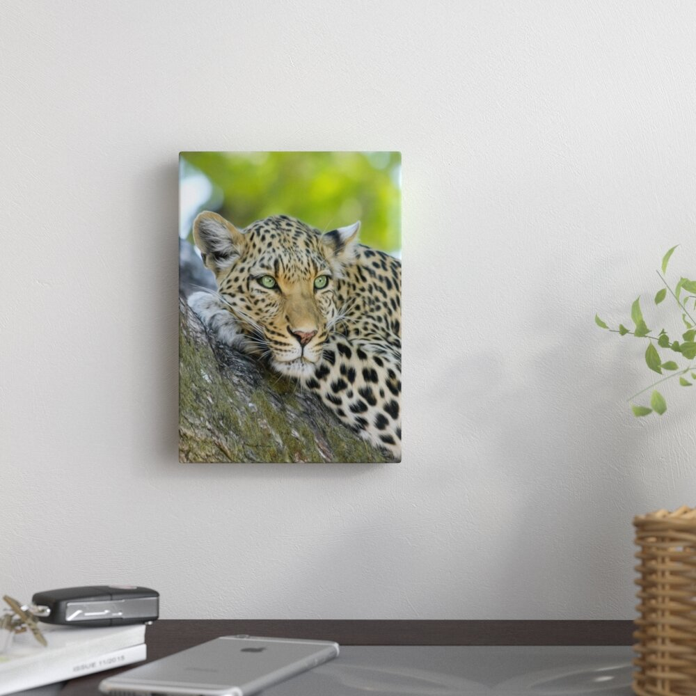 East Urban Home Leopard Gepard Animal Cat Photographic