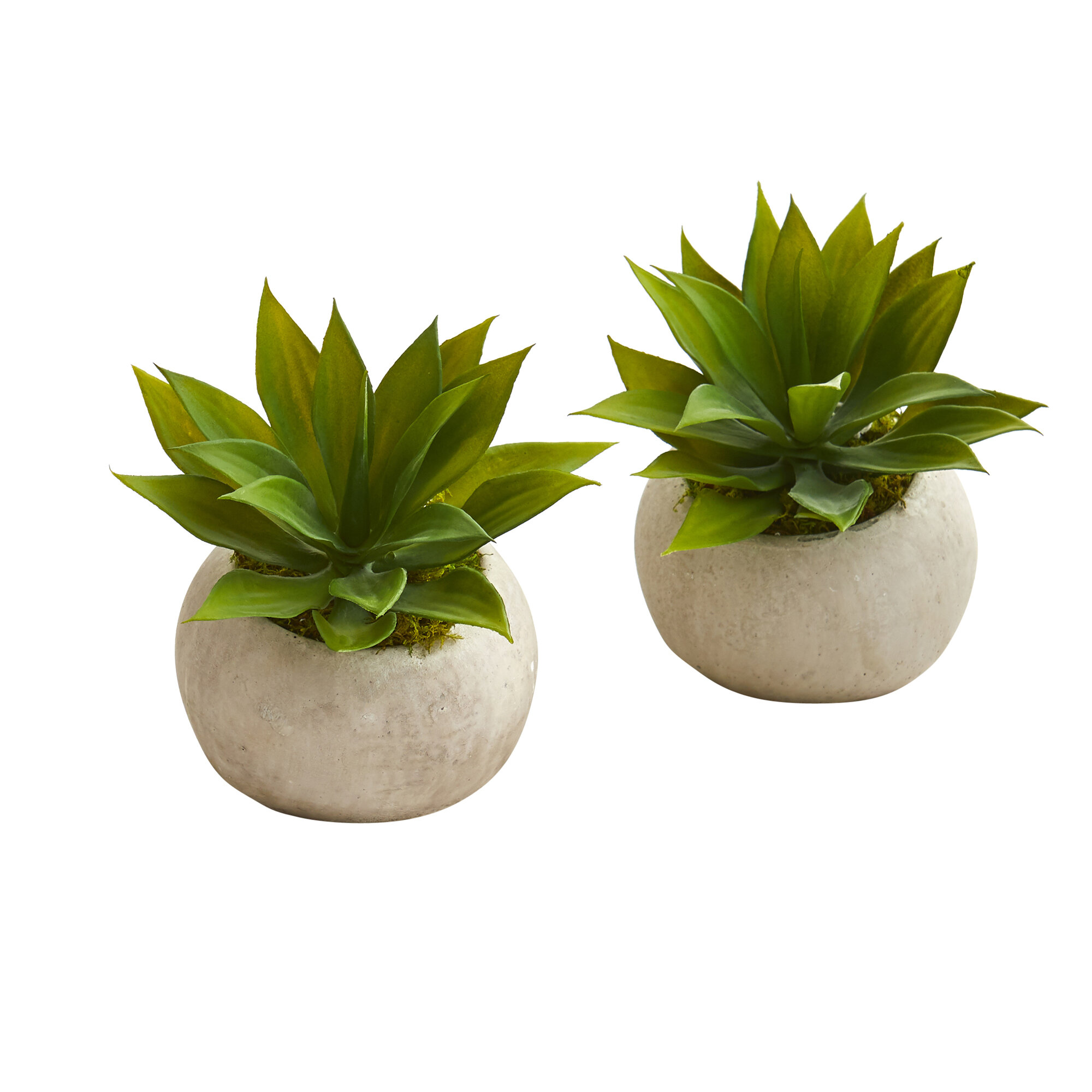 Primrue 2 Artificial Agave Succulent In Planter Set Wayfair