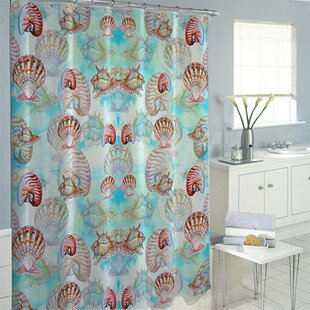 Multi Shells Single Shower Curtain