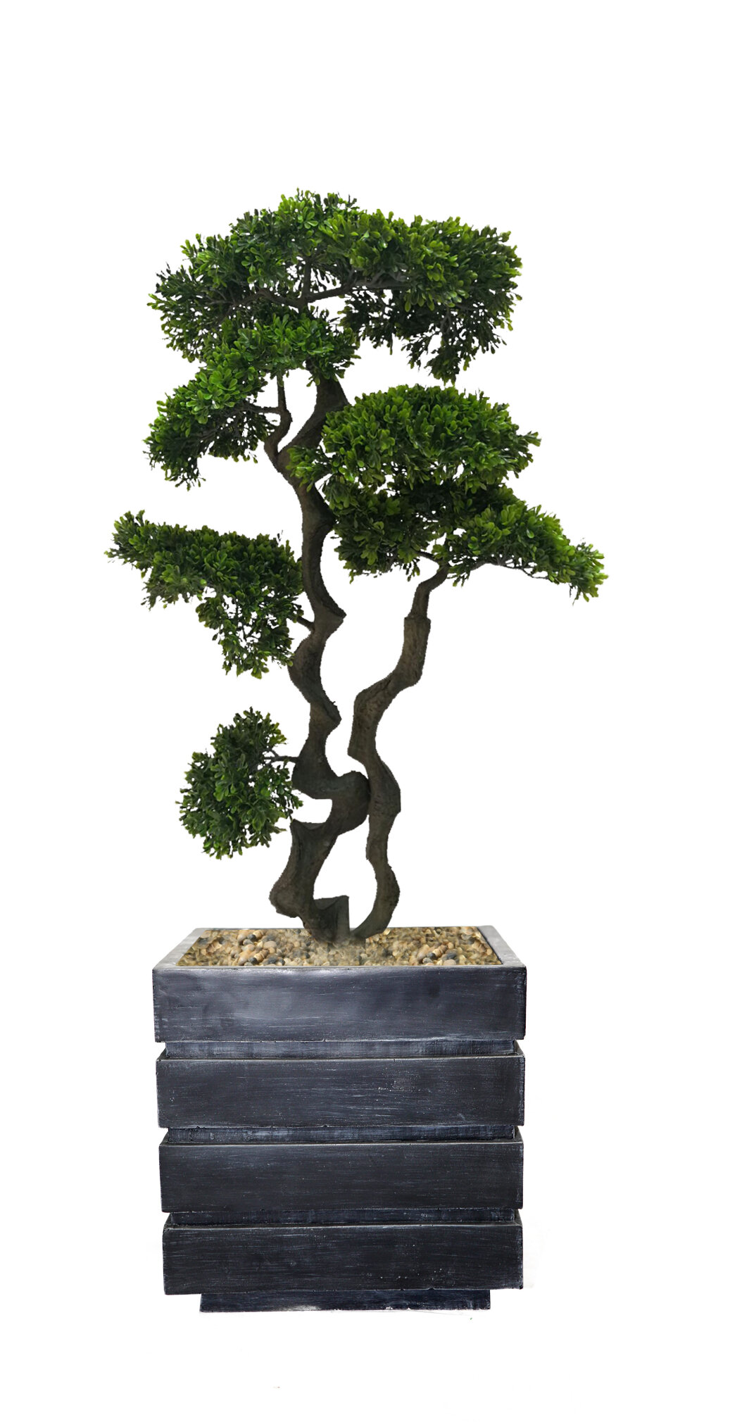Bloomsbury Market Bonsai Tree In Planter Reviews Wayfair