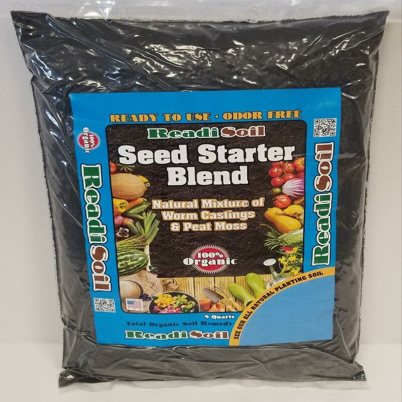 100 Seeds Tidy With Red Berries Now just in Garden Soil Sow
