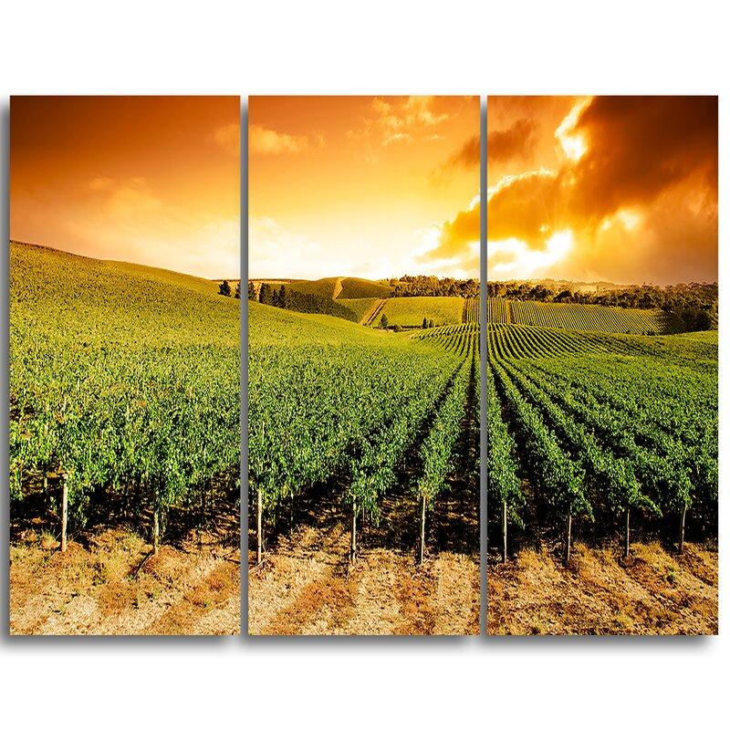 Designart Sunset Vineyard Panorama 3 Piece Graphic Art On Wrapped Canvas Set Wayfair