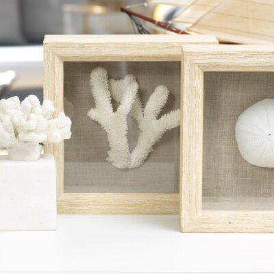 Rosecliff Heights Staghorn Coral in Shadow Box Wall Décor | Wayfair