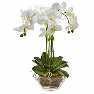 Triple Phalaenopsis Orchid Floral Arrangements in Decorative Vase