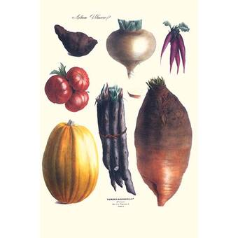 Buyenlarge Vegetables Tomato Raddish Sweet Potato Pumpkin Carrots Yam By Philippe Victoire Levêque De Vilmorin Graphic Art Wayfair