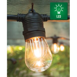 Fantado 31 ft. 15-Light Standard String Light by The Paper Lantern Store