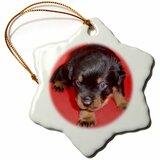Rottweiler Christmas Wayfair