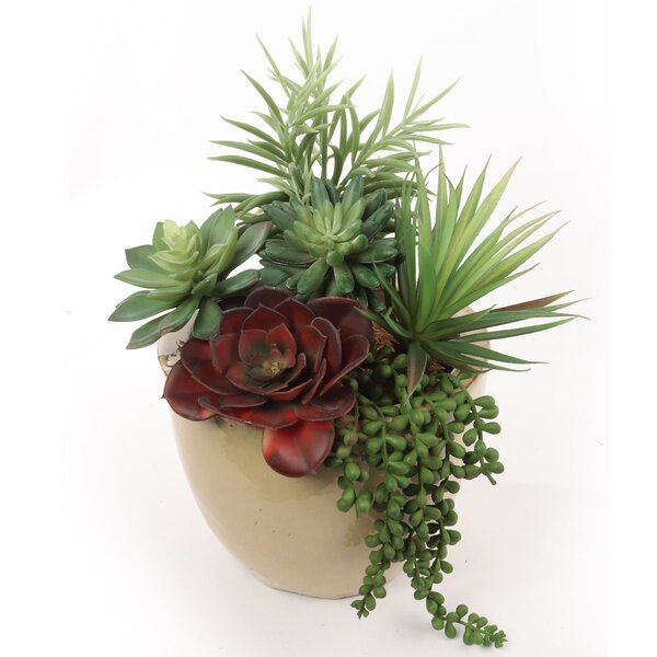 Succulent Centerpiece Wayfair