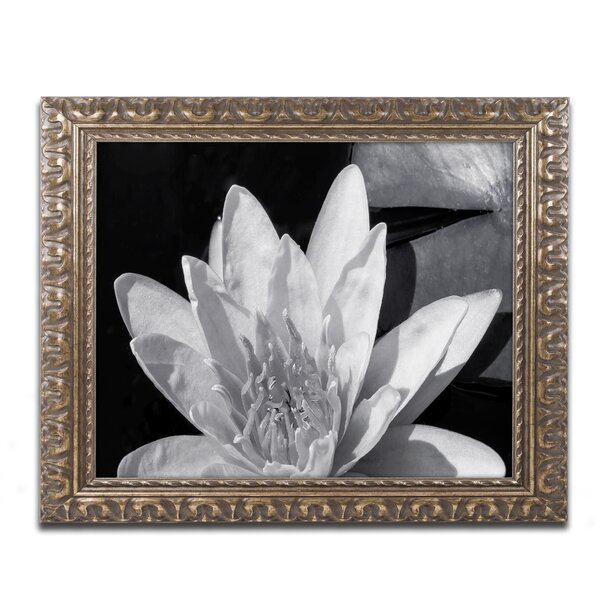 Latitude Run Water Lily In Black And White Framed Photographic Print Wayfair