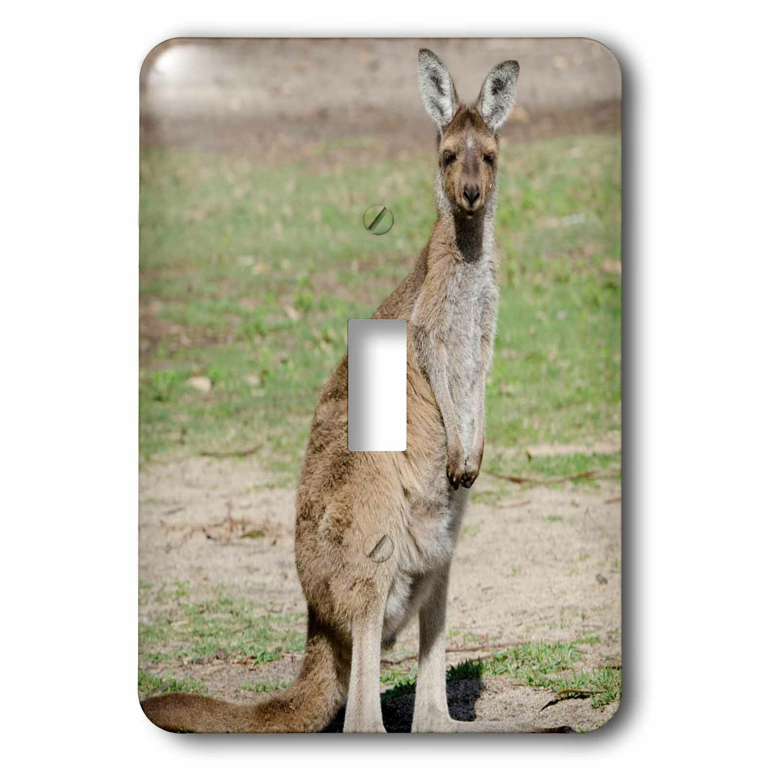 3drose Australia Kangaroo 1 Gang Toggle Light Switch Wall Plate Wayfair