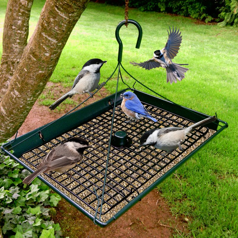 bird plate platform strong for feeder pole feeders pet cool perky awesome mounting eco carousel full hopper image mounted super