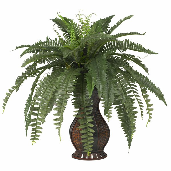 indoor plants you'll love | wayfair