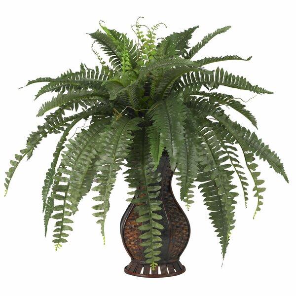 Indoor Plants You\'ll Love | Wayfair
