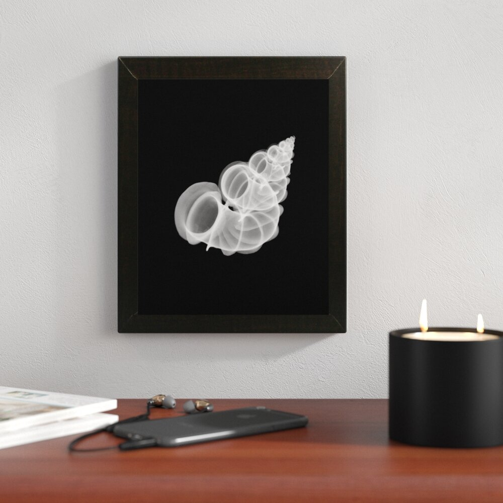 'Precious Wentletrap Negative X-Ray' Graphic Art Print