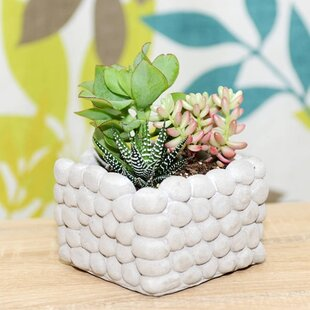 Orford Terrarium By Brambly Cottage