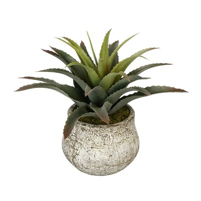 Artificial Star Succulent Desk Top Plant in Decorative Decorative Vase House of Silk Flowers Inc.