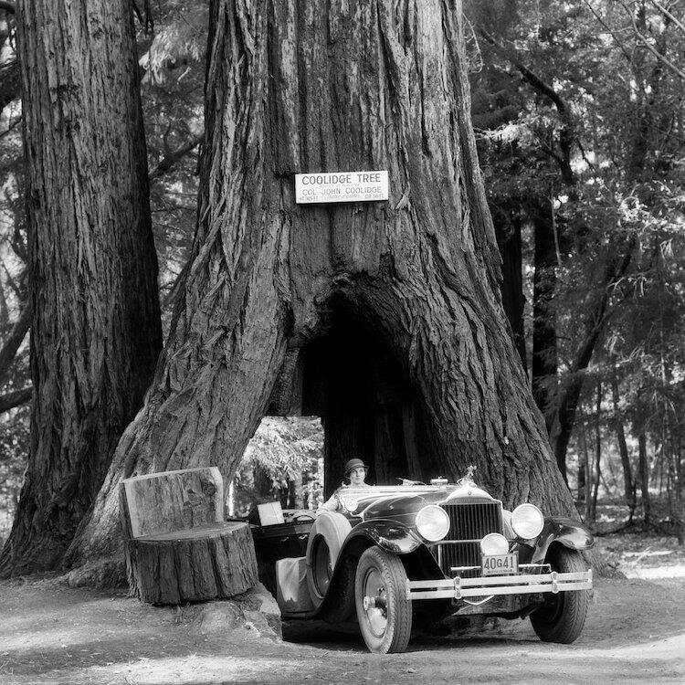 '1930s Woman Driving Convertible Car Through Opening in Giant Sequoia Tree Trunk Coolidge Tree Mendocino California' Photographic Print on Wrapped Canvas