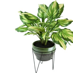 Modern Floor Indoor Faux Plants + Trees | AllModern