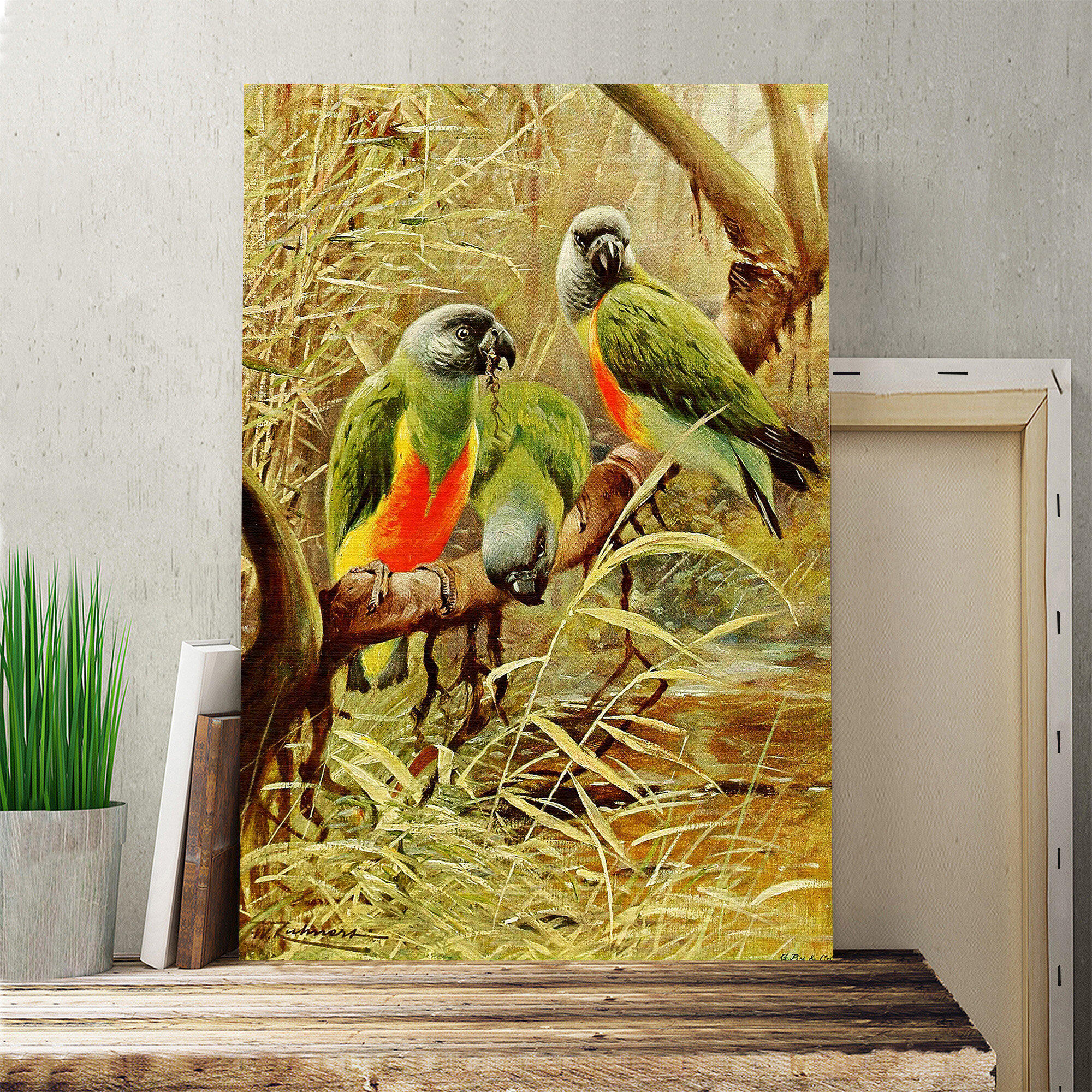 Big Box Art \'Vintage Senegal Parrot\' by Wilhelm Kuhnert Painting ...